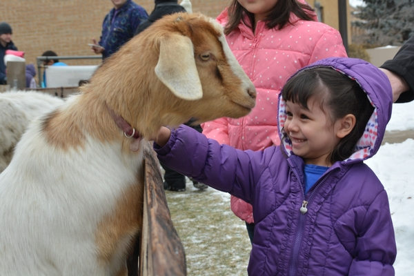 Young girl petting a llama at the Children's Nativity