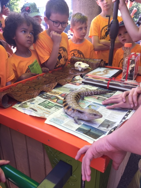 ECC students look at a lizard at the zoo.